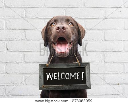 Happy Dog With Chalkboard With Welcome Text Says Hello Welcome We're Open Against White Brick Outdoo