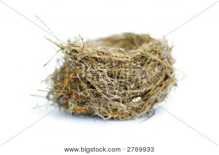Nest On White