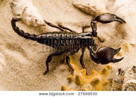 Scorpion on the beach