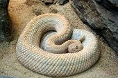 a snake all coiled up poster