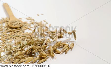 Oat Grain And Ear Of Oats Closeup On A White Background. Copy Space, Horizontal Background