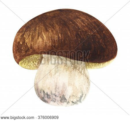 Watercolor Image Of Cute White Mushroom On Strong Leg With Wide Brown Cap. Hand Drawn Illustration O