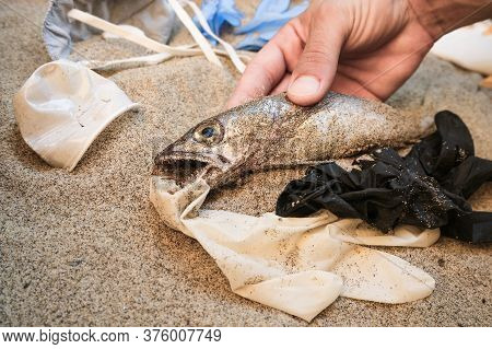 Man Grab Dead Cod Fish In Medical Discarded Garbage, Disposable Waste Pollution Effects On Sandy Sea