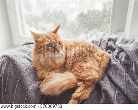 Cute Ginger Cat Lying On Blanket. Fluffy Pet On Window Sill. Snowy Weather Outside. Domestic Animal