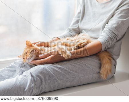 Cute Ginger Cat Lying On Womans Knees. Woman In Grey Pajama Strokes Fluffy Pet. Cozy Morning At Home
