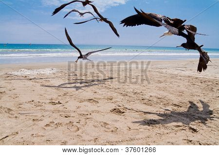 Seagulls chasing for a meal