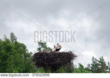 White Storck Nest With Two Birds. Storcks In Their Nest