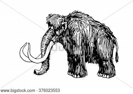Prehistoric Mammal Animal, Tundra Woolly Mammoth With Giant Tusks, Vector Illustration With Black In