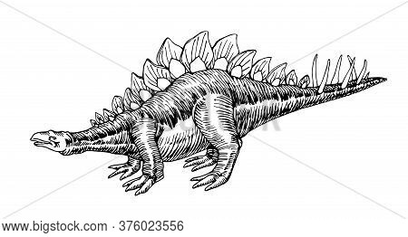 Prehistoric Jurassic Reptile, Herbivorous Stegosaurus Dinosaur With A Crest & Spines On Its Tail, Ve