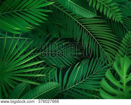 Tropical Leaves Horizontal Background. Jungle Exotic Banana Leaf And Areca Palm. Wallpaper Screen Su