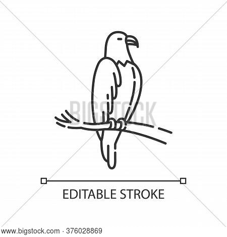 Eagle Pixel Perfect Linear Icon. Dangerous Bird Of Prey. Thin Line Customizable Illustration. Contou