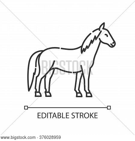Horse Pixel Perfect Linear Icon. Wild Stallion, Common Steed. Equestrian Sport, Horse Breeding Thin