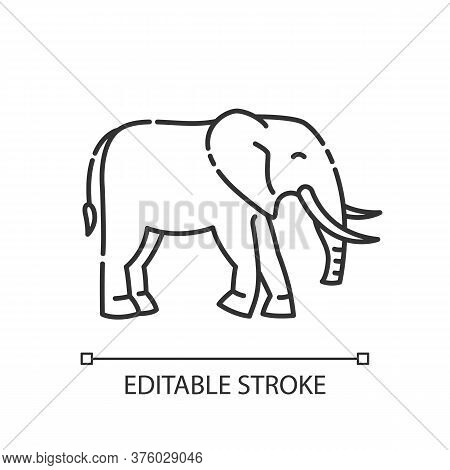 Elephant Pixel Perfect Linear Icon. Exotic Wildlife. Thin Line Customizable Illustration. Contour Sy