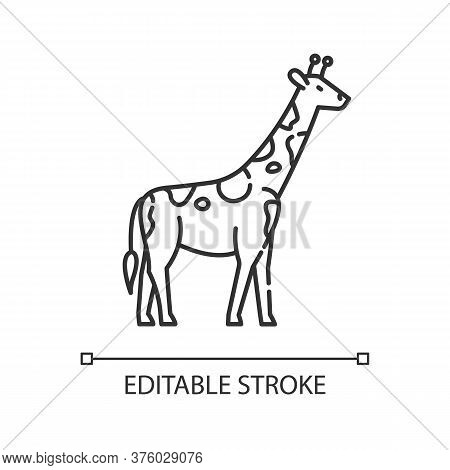 Giraffe Pixel Perfect Linear Icon. Exotic Animal With Long Neck. Tropical Zoo Thin Line Customizable