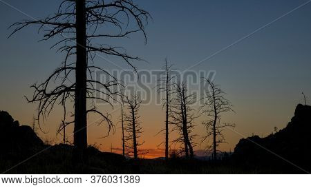 Pine trees burned by 2012 Hewlett Gulch Wildfire at Greyrock near Fort Collins, Colorado, silhouette against sunset sky.