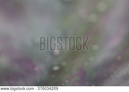 Out Of Focus Colorful Abstract Background Of Green, Purple, And White Colors
