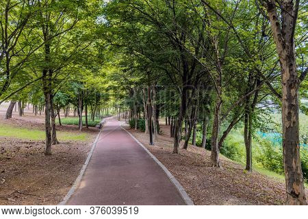Paved Walking Path Under Shade Trees Through Wooded Urban Park