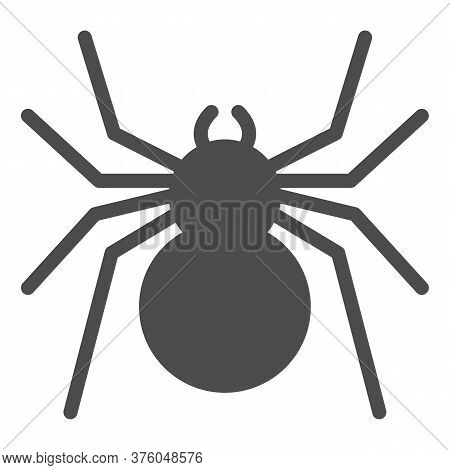 Spider Solid Icon, Insects Concept, Predatory Arachnid Sign On White Background, Classic Spider Icon