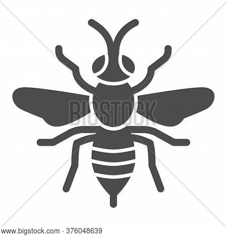 Wasp Solid Icon, Insects Concept, Bee Sign On White Background, Wasp Insect Icon In Glyph Style For