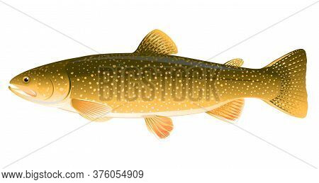 Realistic Lake Trout Fish Isolated Illustration, One Freshwater Fish On Side View