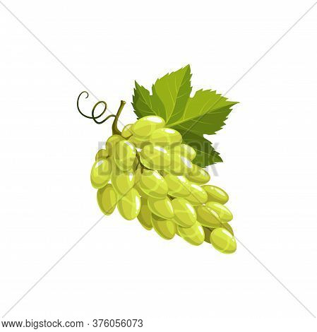 Grape Fruit, Green Or White Grapes Food, Vector Isolated Icon. Grapes Bunch With Leaves And Fruits V