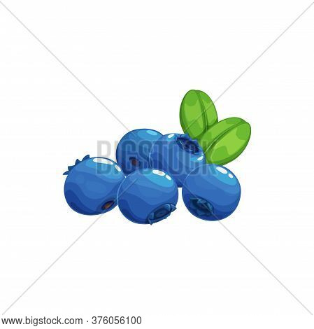 Blueberry Fruits Icon, Blue Berries Bilberry Food, Vector. Wild Forest Or Farm Garden Blueberries Fr