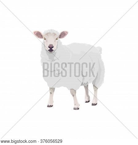 Sheep Farm Animal Cattle Icon, Lamb Livestock And Mutton Meat Food Product Symbol. Cartoon Isolated