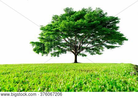 Big Green Tree With Beautiful Branches And Green Grass Field Isolated On White Background. Lawn In G