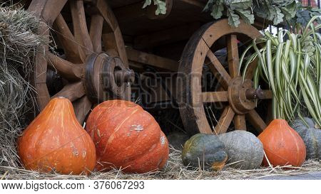 Different Varieties Of Pumpkins On Straw, Next To The Wheel Of A Wooden Cart, Rustic Still Life. Rip
