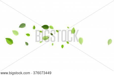 Green Greens Herbal Vector Illustration. Tea Foliage Background. Lime Leaves Realistic Plant. Leaf S