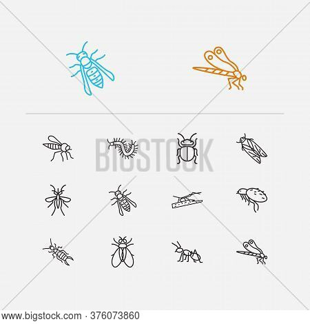 Beetle Icons Set. Beetle And Beetle Icons With Mosquito, Earwig And Cicada. Set Of Harmful For Web A