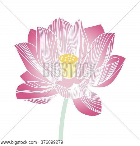 Beautiful Blooming Water Lily. Pink Lotus Flower On A White Background. Stylized Lily.