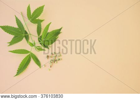 Cannabis Marijuana Fresh Leaves And Seeds Close Up On Light Background With Copy Space