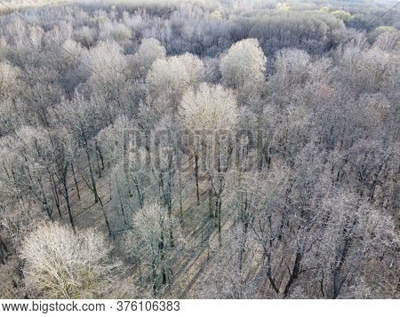 Leafless Trees In A Spring Forest, Aerial View.