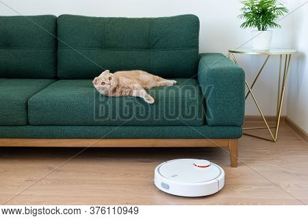 Robotic Vacuum Cleaner Cleaning The Room While Cat Relaxing On Sofa. Housekeeping Help, New Technolo