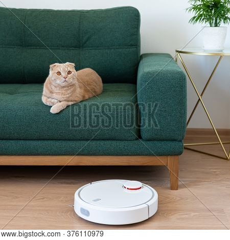 Housework And Technology Concept - Robotic Vacuum Cleaner Cleaning The Living Room While Cat Relaxin