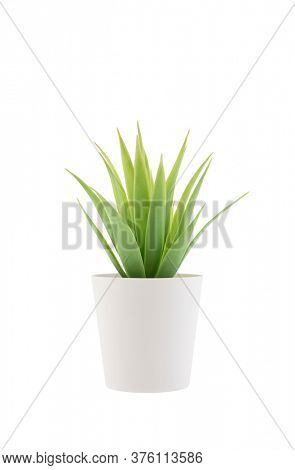 Small plant in a pot isolated on white with clipping path