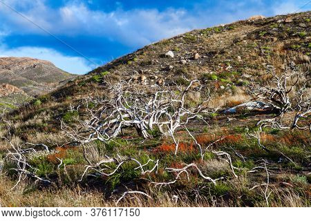 Dry tree branches. Hurricane wind from Antarctica. Patagonia. The magnificent park of Torres del Paine. The concept of extreme tourism