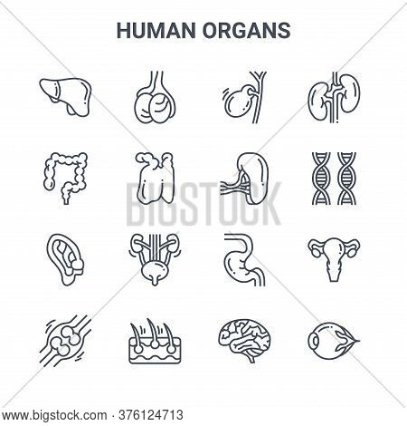 Set Of 16 Human Organs Concept Vector Line Icons. 64x64 Thin Stroke Icons Such As Testicles, Colon,