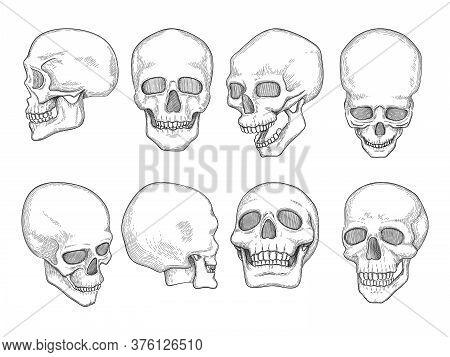 Skulls. Human Anatomy Bones Head Skull Mouth And Eyes Vector Hand Drawn Illustrations. Anatomy Skele
