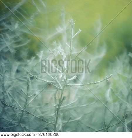 Abstract Floral Squre Background. Blurred Twigs And Sprigs. Green Natural Background. Mysterious For