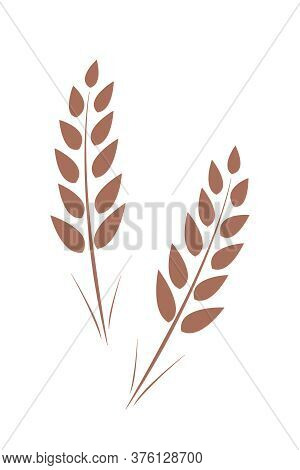 Mature Ears Of Wheat. Vector Illustration Isolated On White.