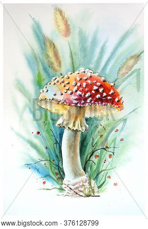 Watercolor Drawing Of A Sun Fly Agaric In The Grass. Fly Agaric.