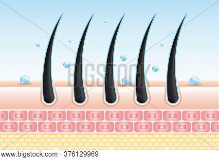 Hair Care Serum Follicle Diagnostics. Anatomy Skin, Medical Human, Epidermis Layer, Vector Illustrat