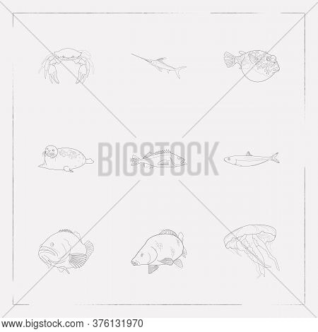 Set Of Fauna Icons Line Style Symbols With Harbor Seal, Carp, Sardine And Other Icons For Your Web M