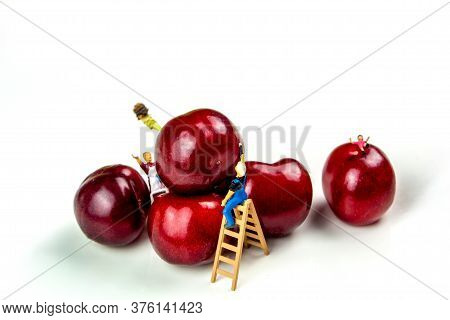 Collection Of Many Cherries In White Ceramic Bowls On White Background Isolated With Miniature Figur