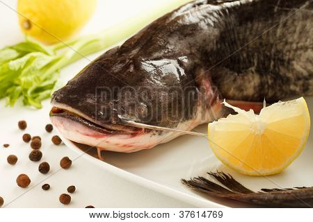 Big raw catfish