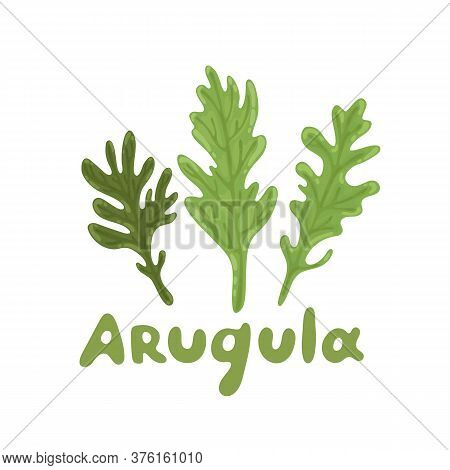 Ruccola Leaves. Set Of Arugula Or Rocket Salad. Nature Organic Vegetable Icon Of Arugula, Ingredient