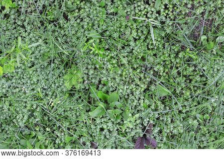 Artificial Beautifal Green Grass Texture For Background
