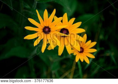 Several Bright Yellow Summer Wildflowers Against Blurred Green Background